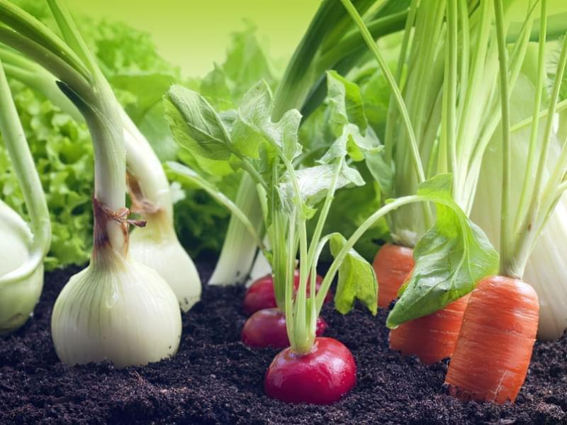 Які овочі садити після огірків на наступний рік? 1