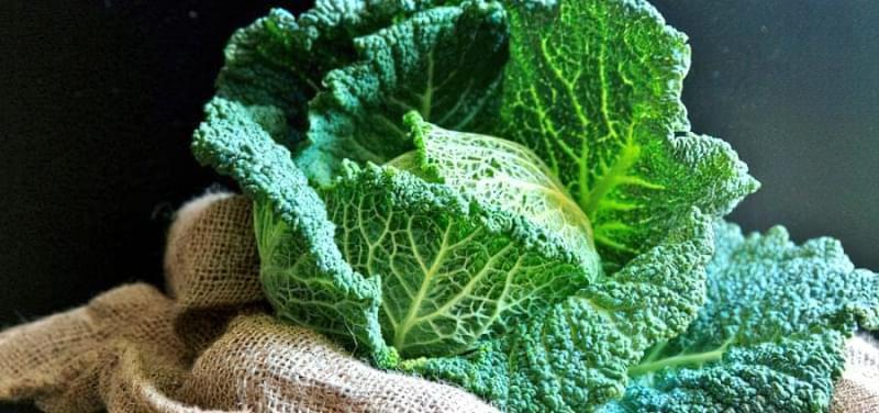 Савойська капуста - опис і вирощування 1
