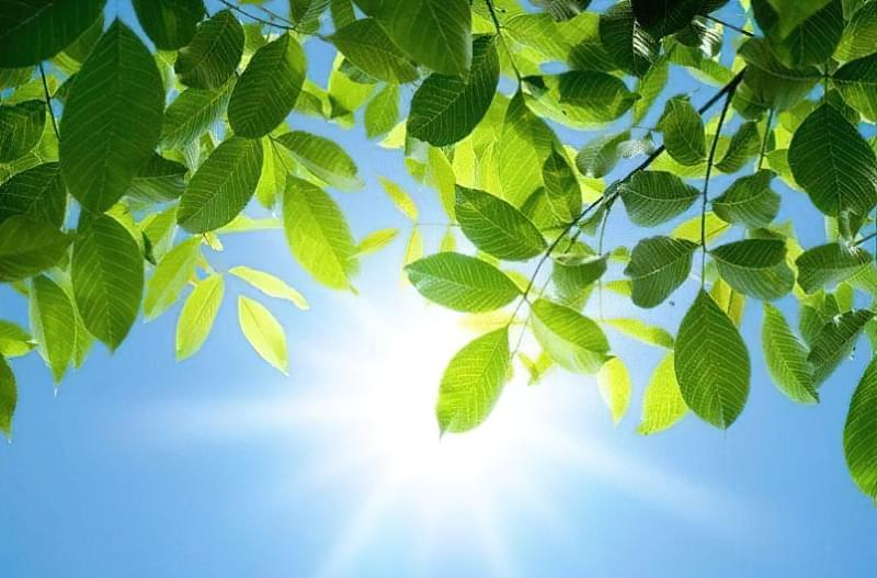 Як світловий день впливає на рослини 1