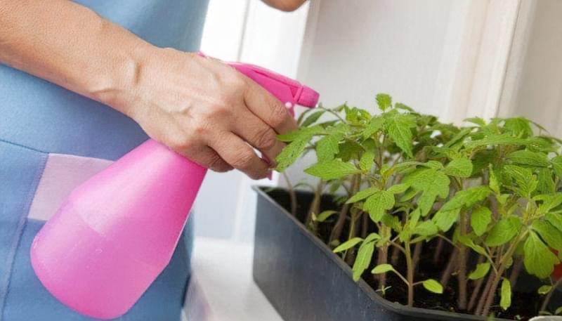 Перекис водню для обробки розсади і рослин 2