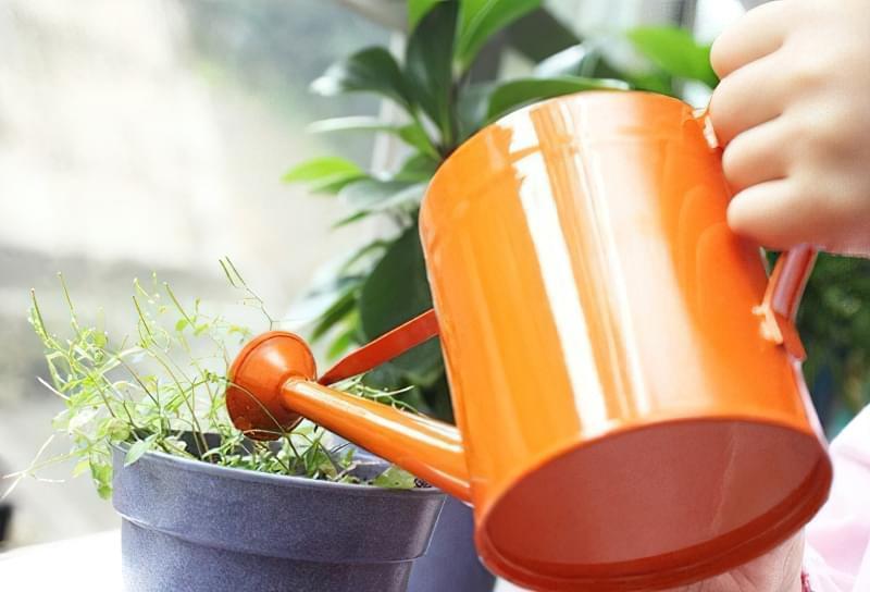Перекис водню для обробки розсади і рослин 3
