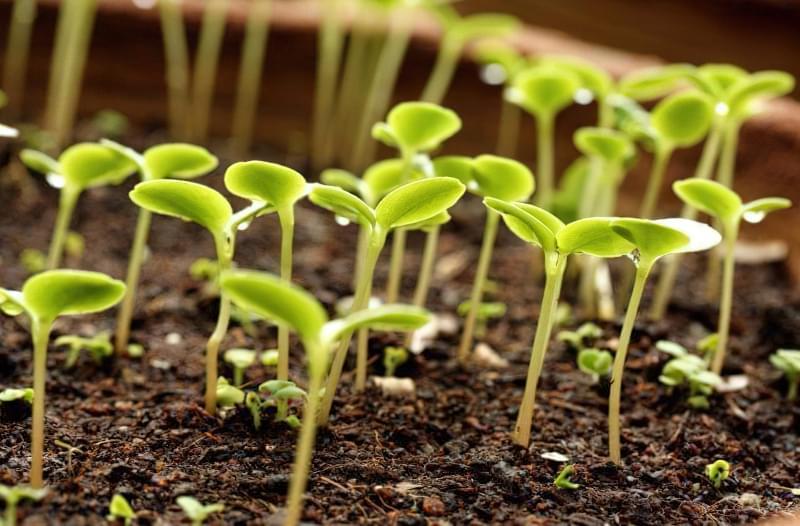 Перекис водню для обробки розсади і рослин 1