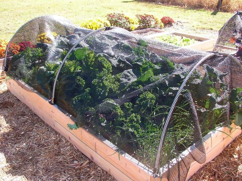 5 правил догляду за садом і городом в спеку 2