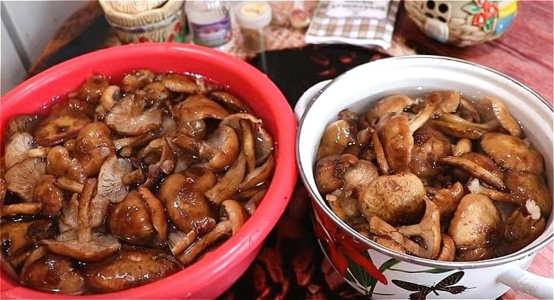 Мариновані опеньки на зиму — смачні рецепти 4