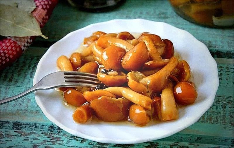 Мариновані опеньки на зиму — смачні рецепти 1