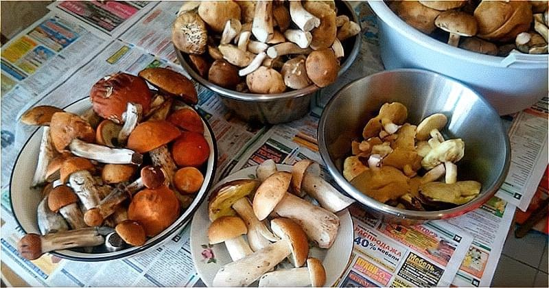 очищаємо і розсортуємо гриби