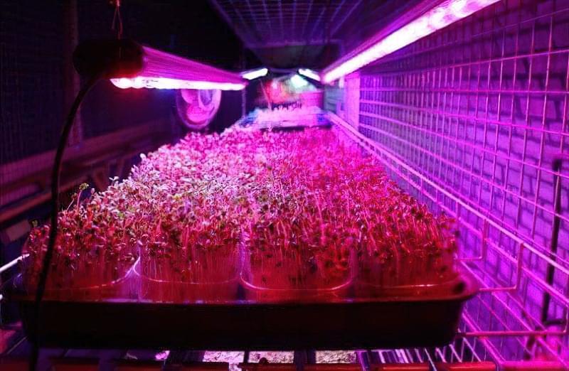 Світлодіоди для розсади. Як впливає на рослини штучне освітлення? 1