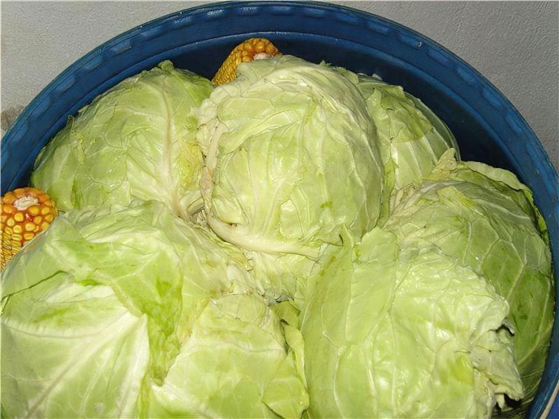 Як засолити капусту для голубців - два простих рецепта на зиму 4