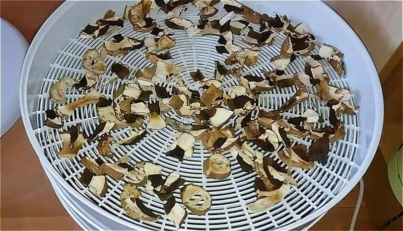 сушені гриби в електросушарці