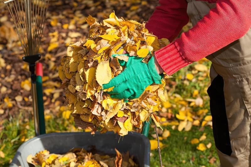 Що робити восени з листям? 1