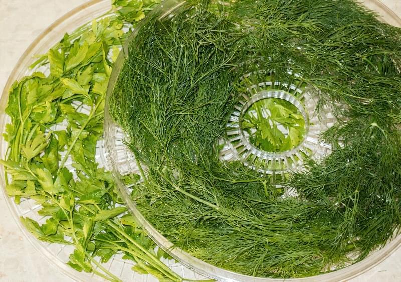 Як правильно сушити зелень в електросушарці, духовці, аерогрилі 3