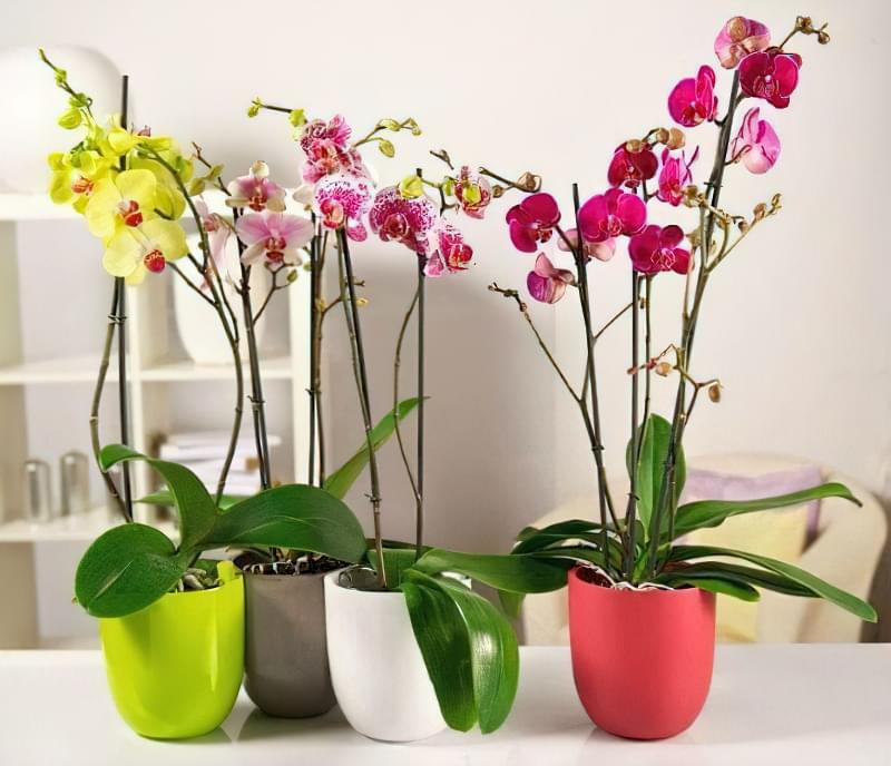 Орхідея: догляд в домашніх умовах після покупки 2