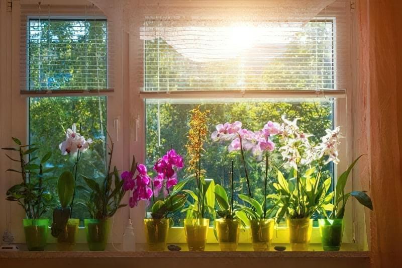 Орхідея: догляд в домашніх умовах після покупки 3