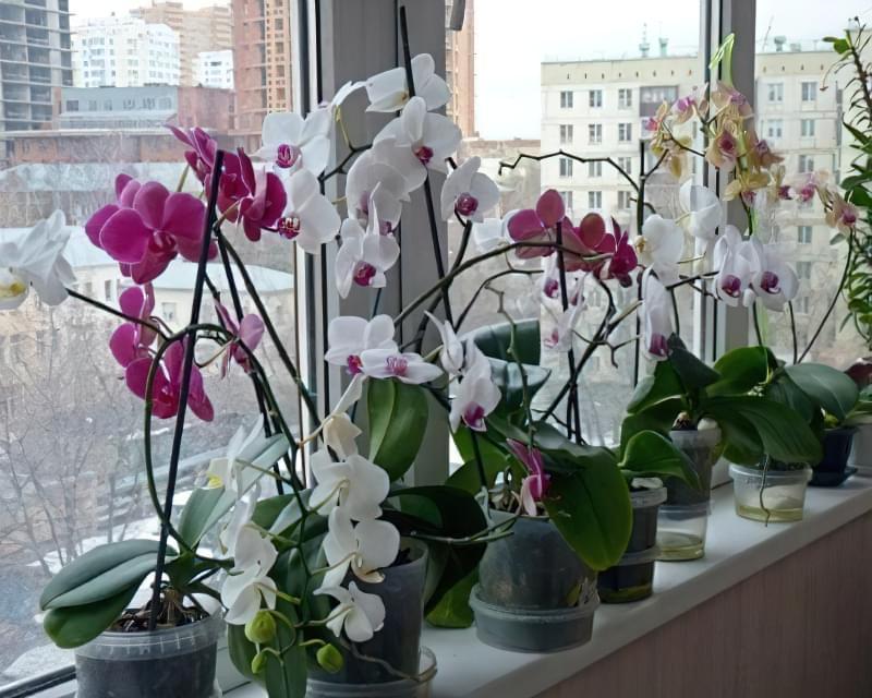 Орхідея: догляд в домашніх умовах після покупки 4
