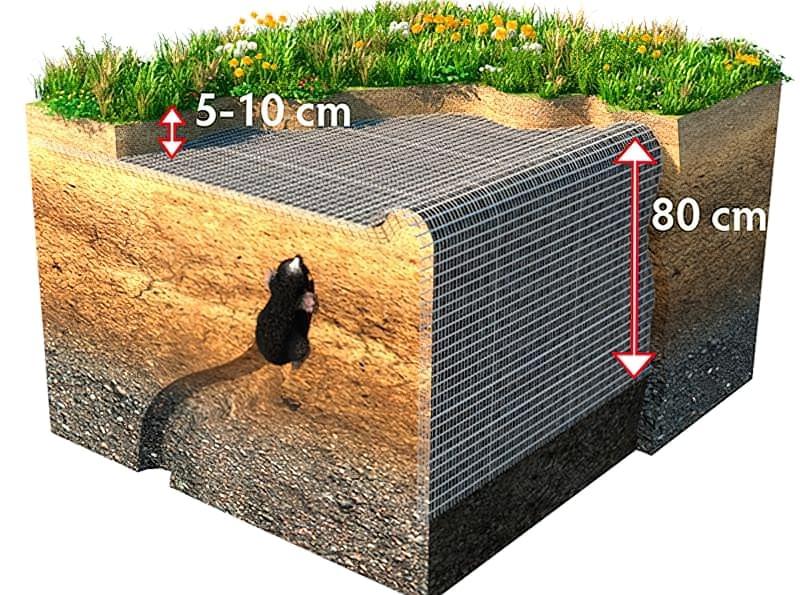 Ефективність сітки від кротів для захисту ділянок і газонів 4