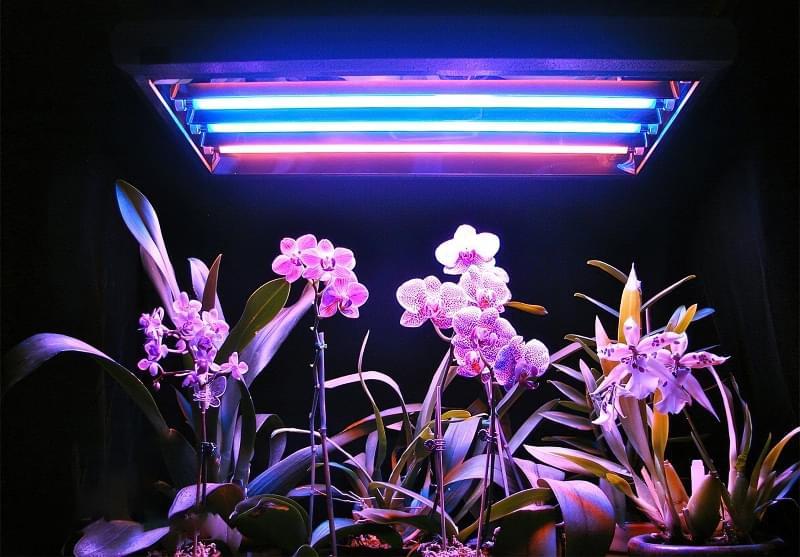 Фітолампи для кімнатних рослин і розсади 2