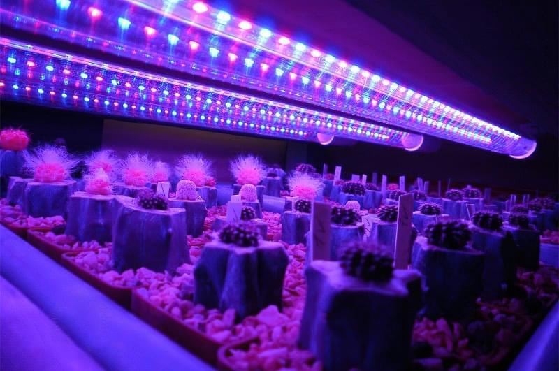 Фітолампи для кімнатних рослин і розсади 5