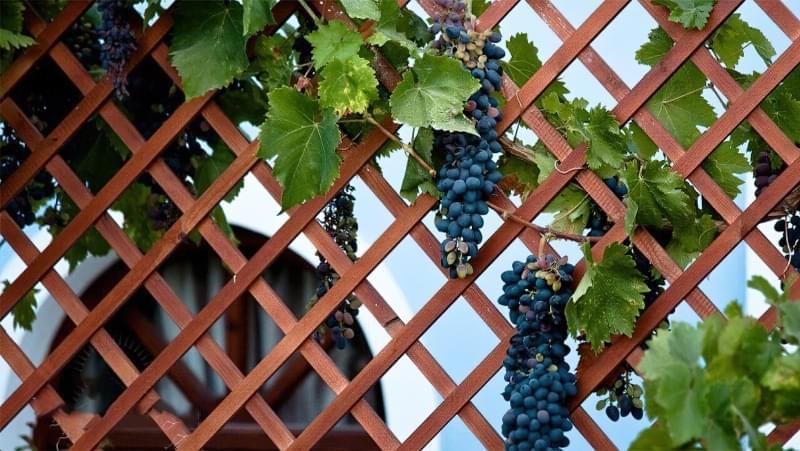 Шпалери для винограду: різновиди та особливості 9
