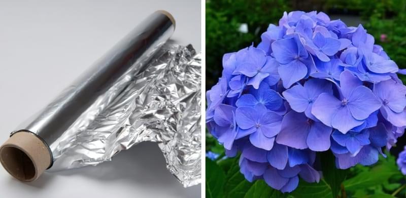 Алюмінієва фольга для зміни кольору гортензії