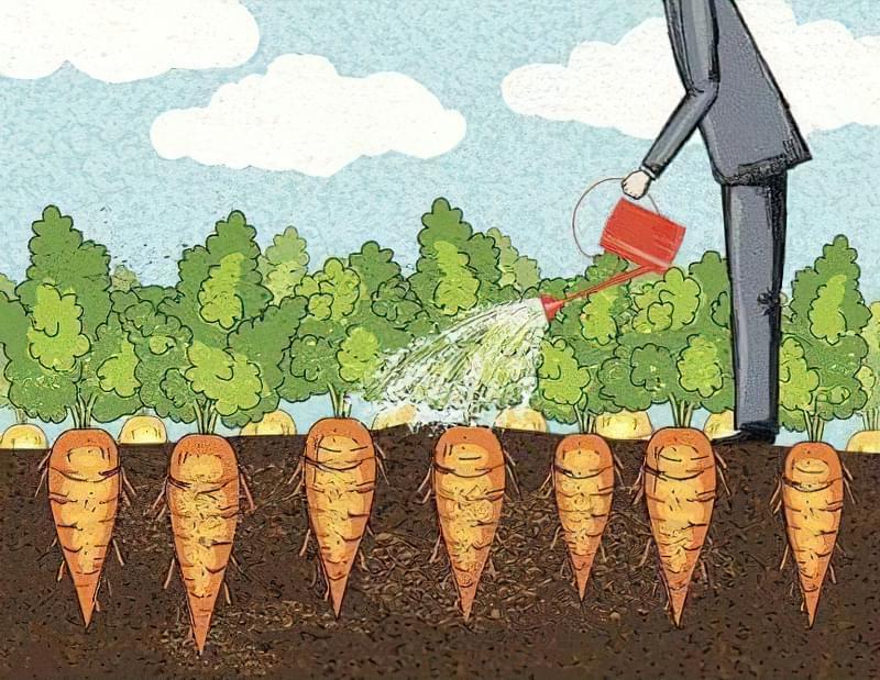 Морква розтріскується в землі: чому це відбувається і що робити, як правильно доглядати 3
