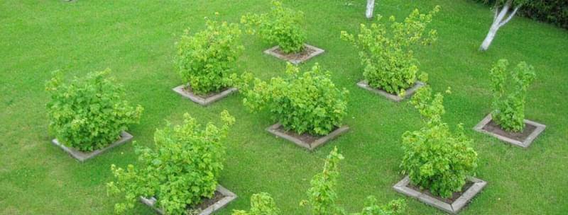 Плодовий сад в ландшафтному дизайні 3