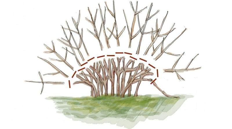 Плодовий сад в ландшафтному дизайні 6