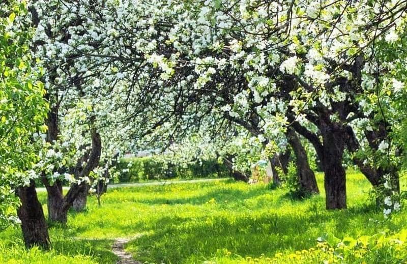 Плодовий сад в ландшафтному дизайні 4
