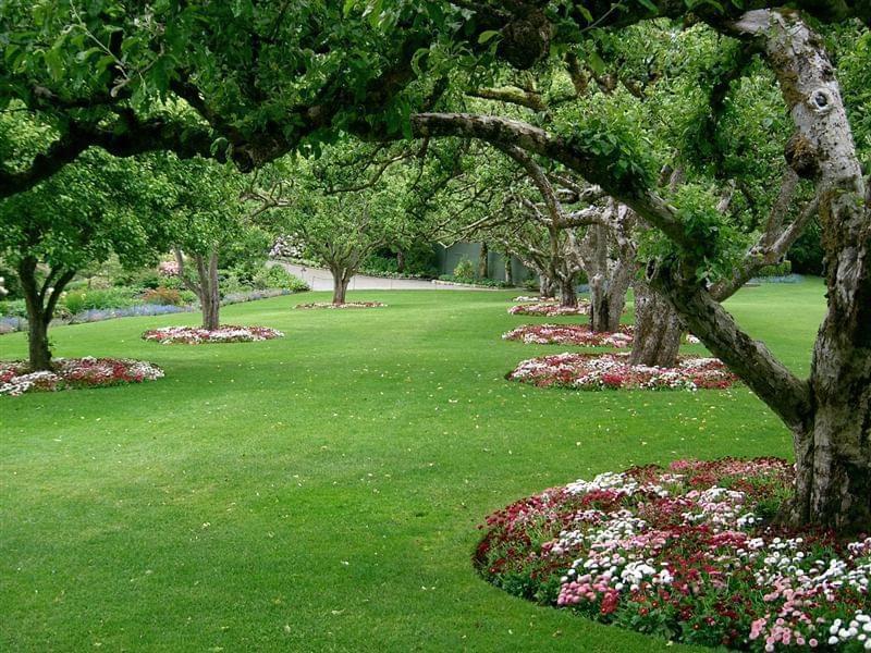 Плодовий сад в ландшафтному дизайні 5