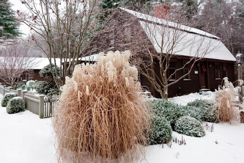 Які рослини та квіти гарно виглядають надворі взимку і не мерзнуть 2