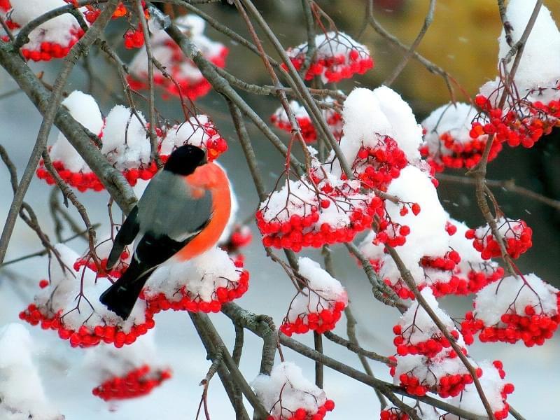 Які рослини та квіти гарно виглядають надворі взимку і не мерзнуть 9