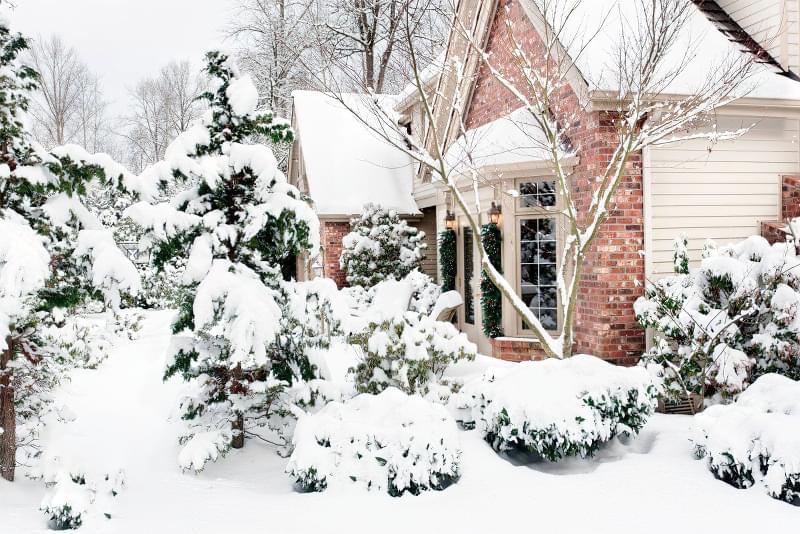 Які рослини та квіти гарно виглядають надворі взимку і не мерзнуть 1