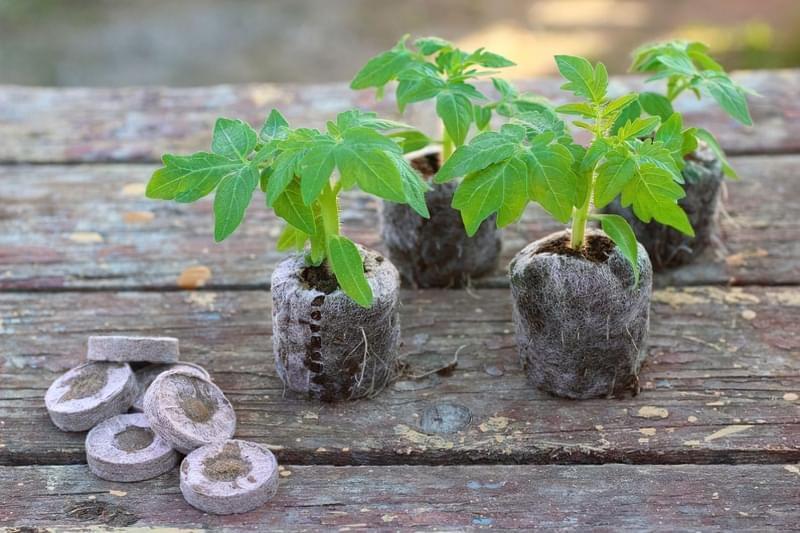 Що таке перевалка рослин? Різниця між пересадкою і перевалкою. 1