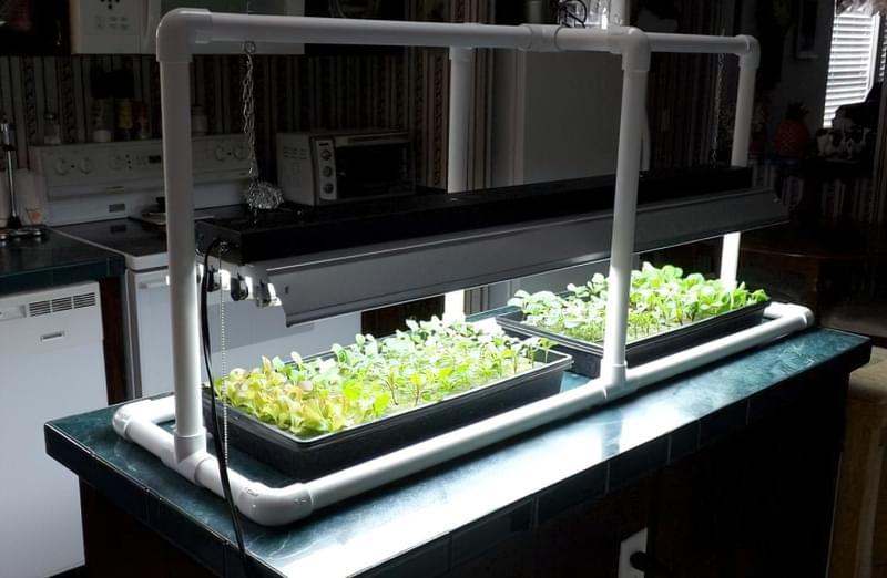 Вербена: посадка на розсаду, вирощування в домашніх умовах 7