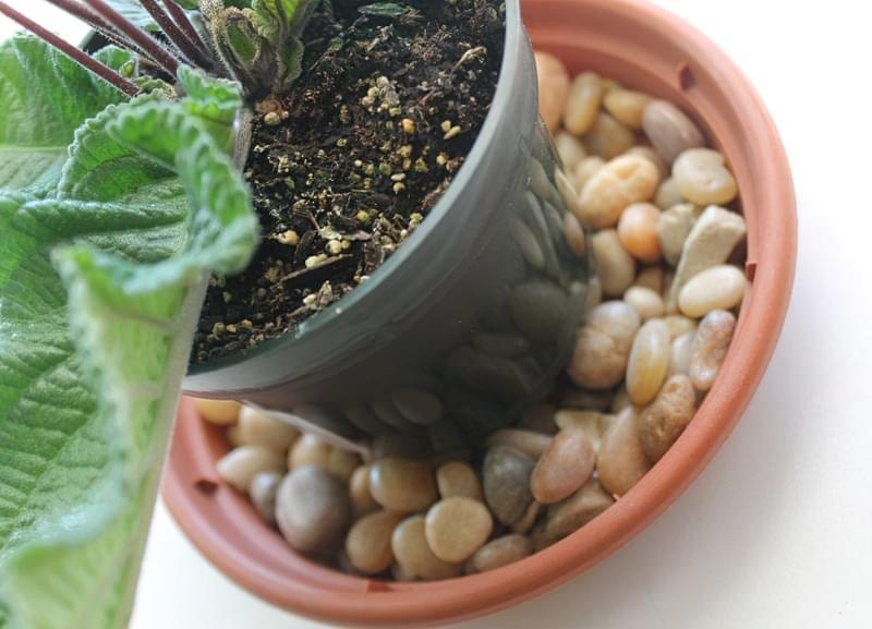 Вологість повітря для кімнатних рослин 2