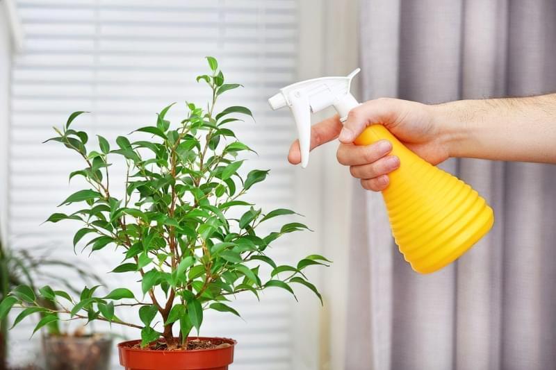 Вологість повітря для кімнатних рослин 3