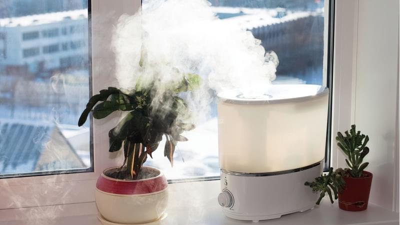 Вологість повітря для кімнатних рослин 4