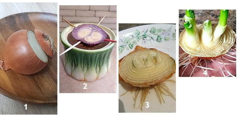 Зелене пір'я цибулі можна отримати з частини цибулини