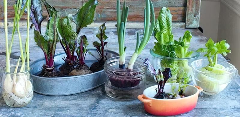 Зелень на підвіконні: вирощування без землі, світла і насіння 3