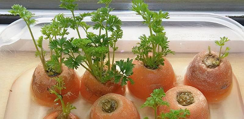 Зелень на підвіконні: вирощування без землі, світла і насіння 1