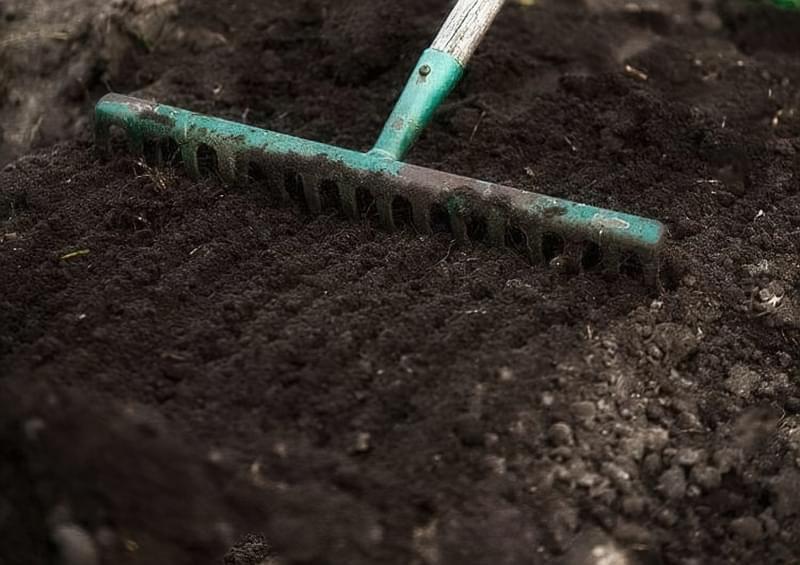 Чи варто садити кукурудзу і огірки на одній грядці? 4