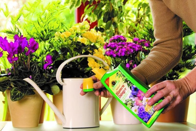 Домашні засоби для підгодівлі кімнатних квітів 2