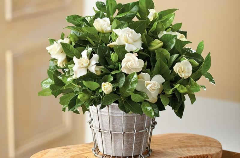 Домашні засоби для підгодівлі кімнатних квітів 4