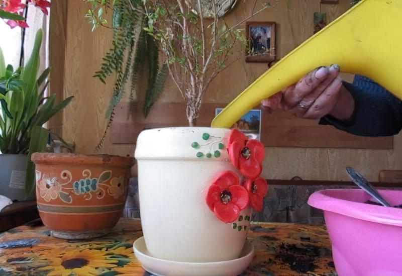 Як цвіте гранат і як виглядають квіти граната 5