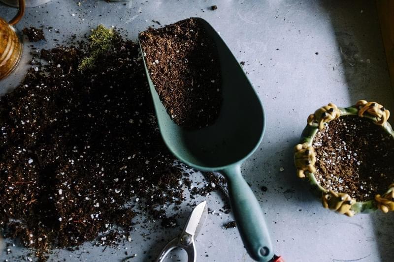 Знезараження землі для кімнатних рослин. Для чого потрібне та способи 1