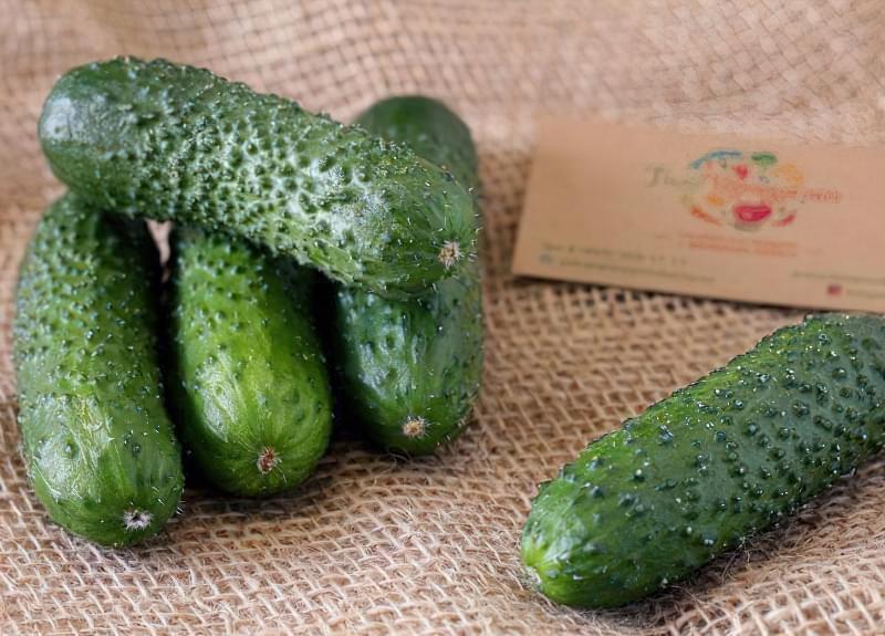 М'які або колючі огірки: причини і їх усунення 4