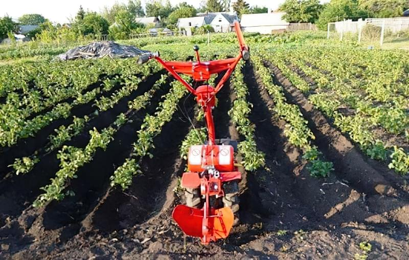 Підготовка картоплі до посадки навесні: коли починати, чим обробити 9