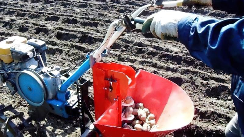 Підготовка картоплі до посадки навесні: коли починати, чим обробити 10