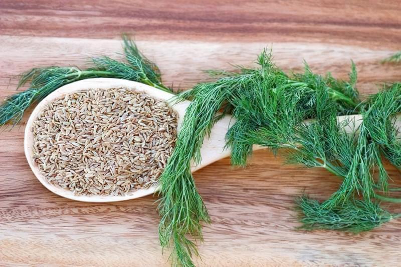 Вирощування кропу з насіння на підвіконні в квартирі: посадка, догляд 2