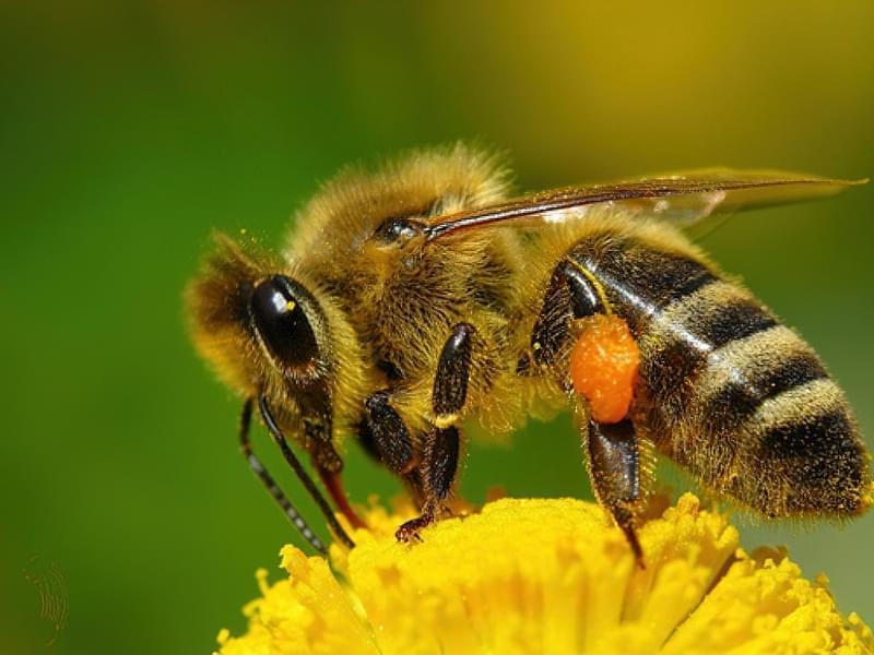 Комахи можуть бути корисними для саду та городу 4