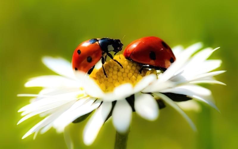 Комахи можуть бути корисними для саду та городу 3